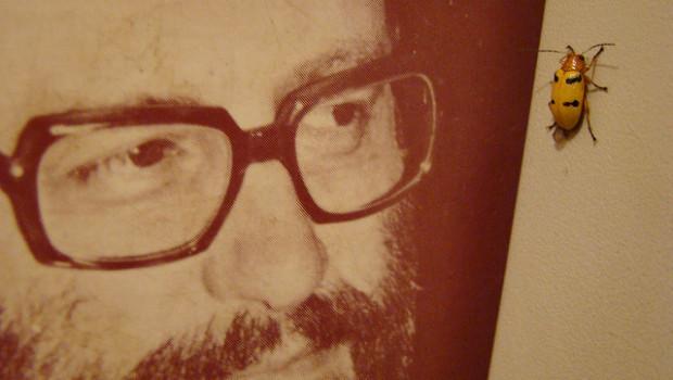 Umberto Eco strappo